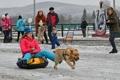 '달려라 달려'…러시아 하카스 공화국 개썰매 경주 대회