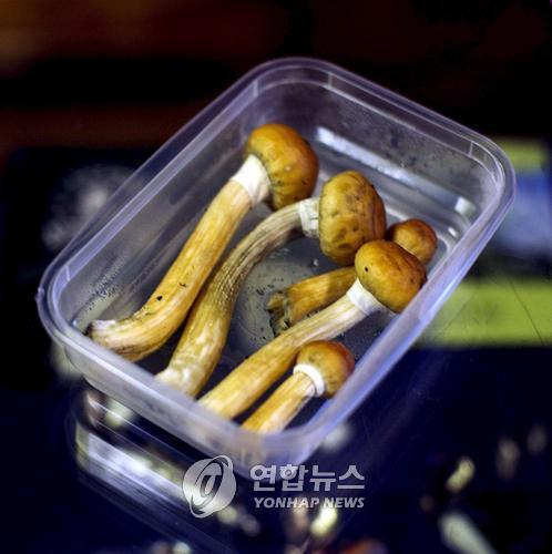 환각버섯[EPA=연합뉴스 자료사진]