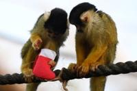 '산타할아버지가 뭘 줬을까?'…크리스마스 선물받는 동물들