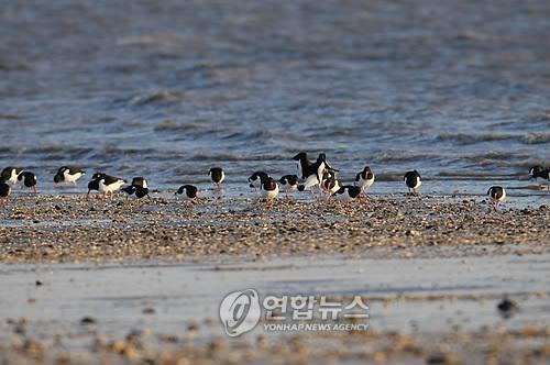 화성시, '화성호 생태 세밀화' 전국 공모전 개최