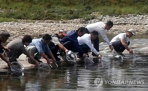 인제 내린천에 토종 쏘가리 치어 방류 [연합뉴스 자료 사진]