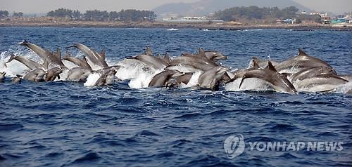 제주 연안 남방큰돌고래