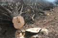 경기 광주서 벌목하던 60대 나무에 깔려 숨져