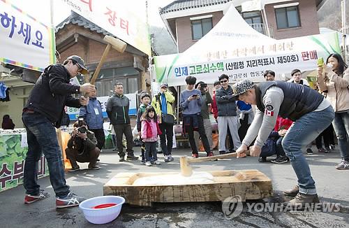인제 고로쇠 축제 '떡메치기 체험'[연합뉴스 자료사진]