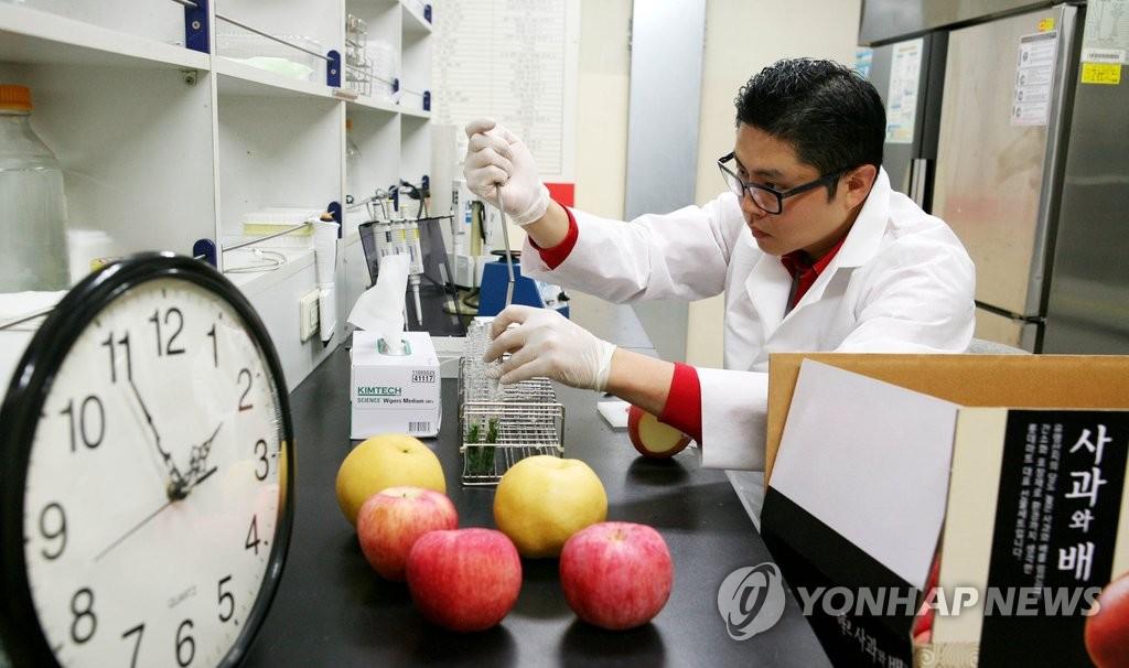농산물 잔류농약 검사 [롯데마트 제공=연합뉴스 자료사진]