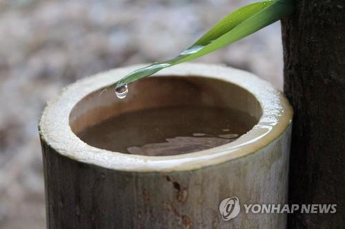 고로쇠수액 채취하는 장면 [연합뉴스 자료사진]