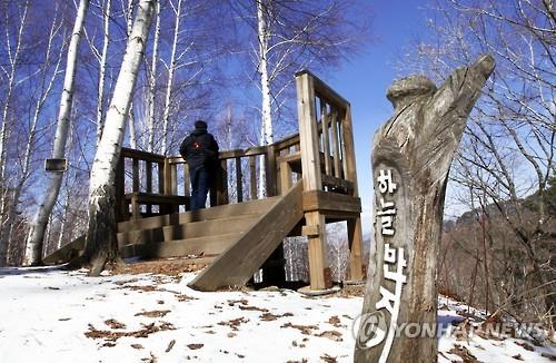 '순백의 세상' 인제 자작나무 숲