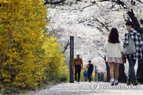 이번 주말 여의도 봄꽃축제…버스 막차 연장한다