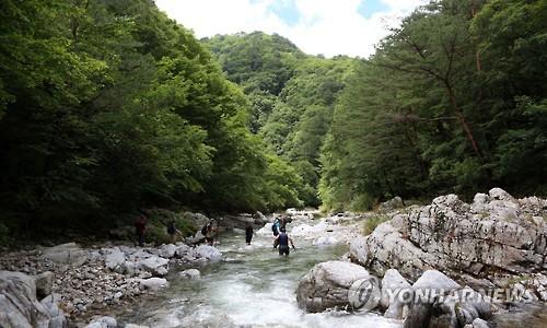 산림생태계 보고 '인제 아침가리' 보호 방안 마련