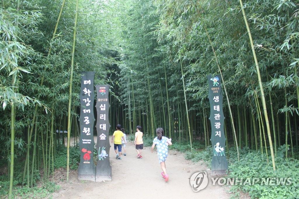 태화강 십리대숲[연합뉴스 자료사진]