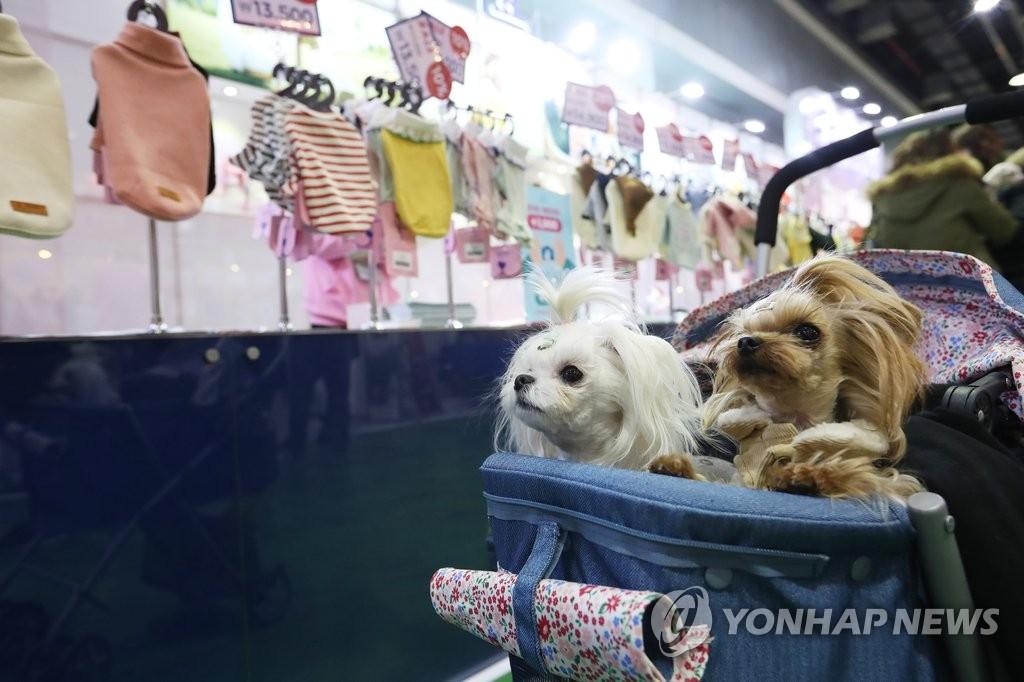 예쁜 옷 골라주세요[연합뉴스 자료사진]