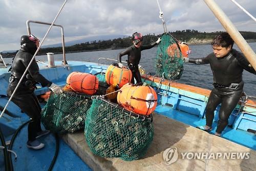 수확물 정리하는 해녀