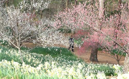 '이제 곧 봄'[연합뉴스 자료사진]