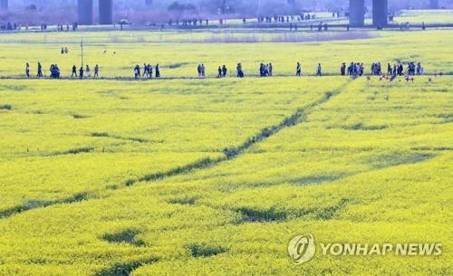 대저생태공원 [연합뉴스 자료사진]