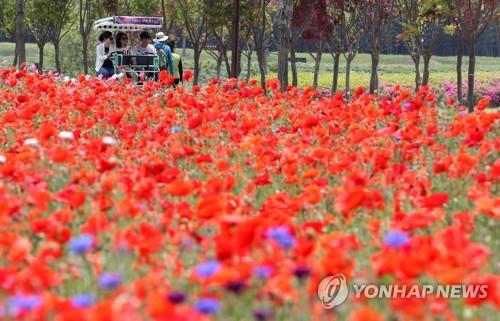 빨간 꽃밭에서