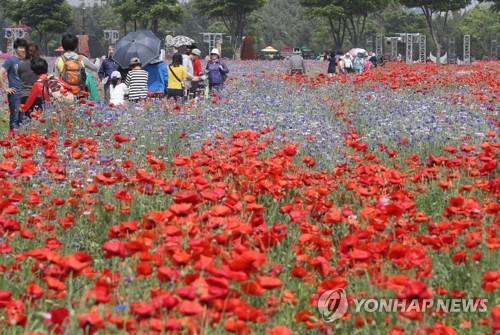 태화강 봄꽃 대향연