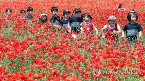 꽃양귀비 동심[연합뉴스 자료사진]