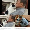 文在寅和爱猫亲昵