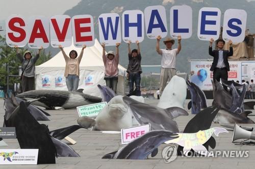 돌고래 온전한 자유를 보장하라!