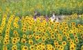 未来花朵向太阳