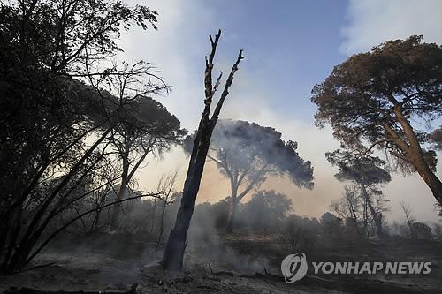 이탈리아 카스텔푸사노 숲이 불에 탄 모습