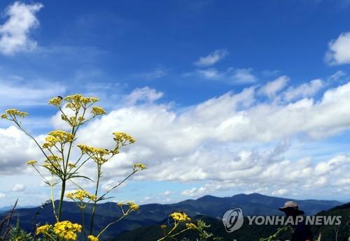 '천상의 화원' 금대봉의 8월 하늘