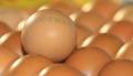 살충제 계란 파동