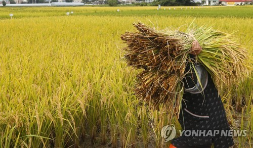 추수하는 농민 [연합뉴스 자료사진]