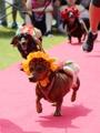 Pet fashion show