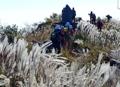ススキ揺れる登山道
