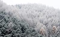 순백의 겨울옷 입은 나무들