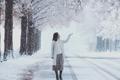 雪后美景如画