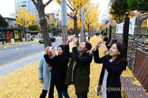 부산 동천 은행나무길 낙엽축제…12월 1일 개최