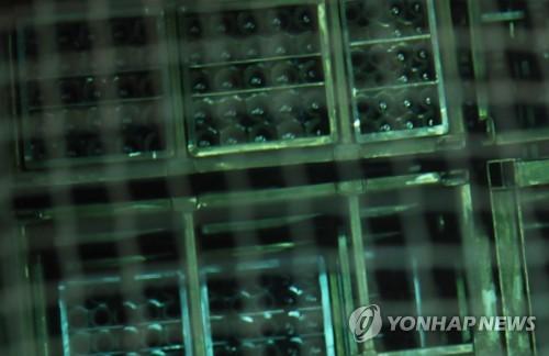 원자력연구원 내 사용후 핵연료