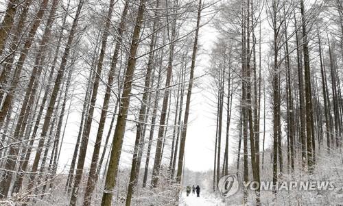 """韩国南德裕山迎""""大雪""""节气"""