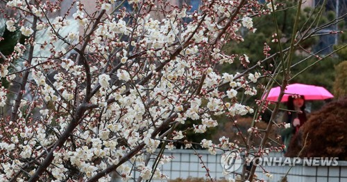 봄비 내리는 교정