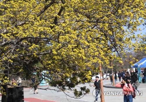 캠퍼스에 찾아온 봄