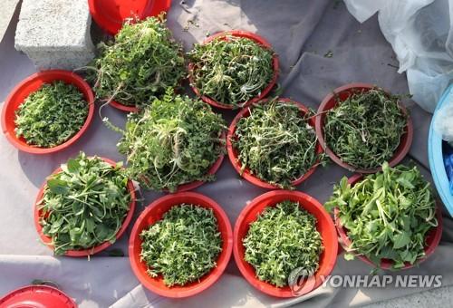 광주시, 봄나물 잔류농약 검사결과 '안전'
