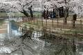 Se siente la primavera en Corea del Sur