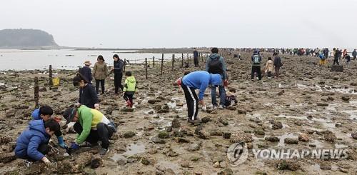 보령 무창포해수욕장서 29일부터 나흘간 홍굴이 체험 한마당
