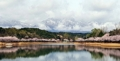 雪残る雪岳山と桜