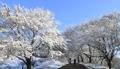 Mundo cubierto de nieve
