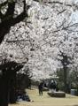 Florece la primavera