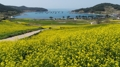 Printemps sur l'île de Cheongsan