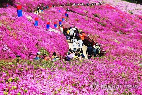 꽃길을 걷다