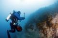 海の生態調査