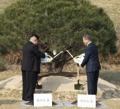 韩朝领导人共植和平树