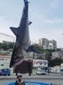 Se encuentra un tiburón muerto