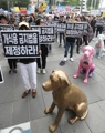 Against dog meat eating