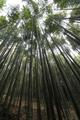 生い茂る竹林